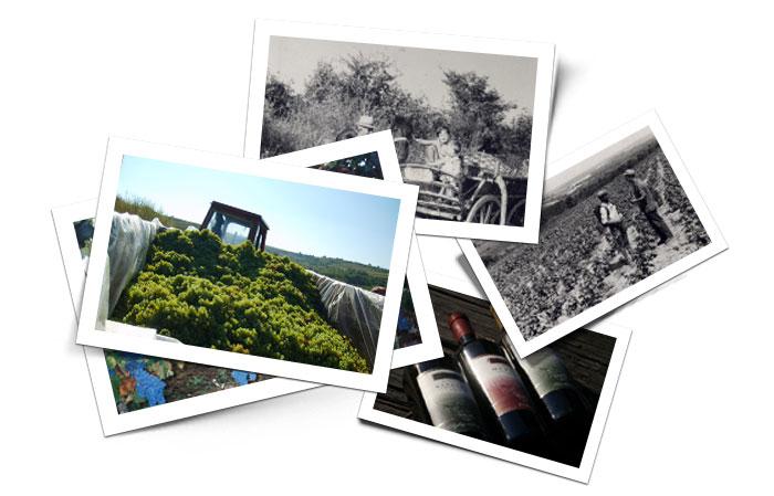 Vinarija Šijački - vinogradi i vina