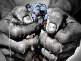 Međunarodni Dan prokupca 14.oktobar